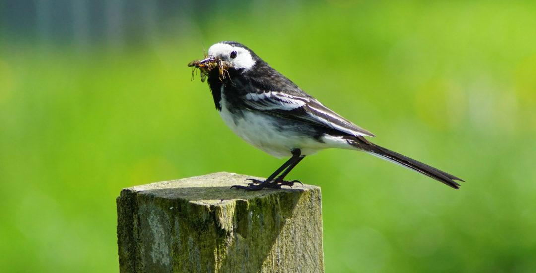 wild bird with bugs in its beak