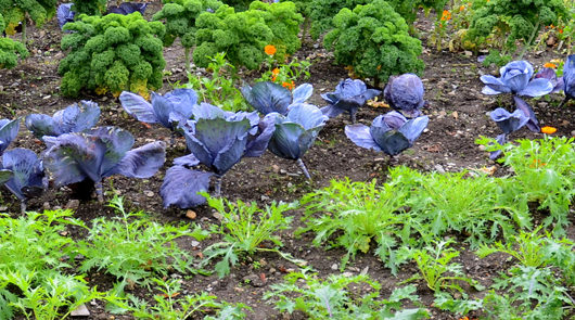 How to plan for a fall vegetable garden