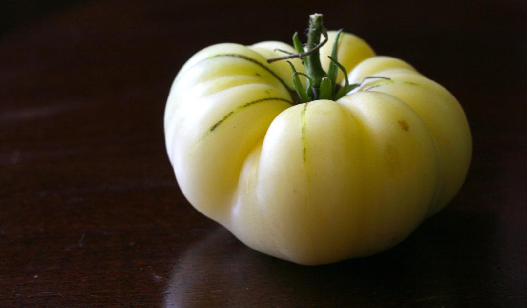 the great white tomato