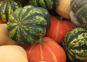 how are summer and winter squash different