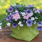 Blueberry Parfait Combination
