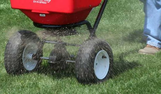 spreading organic lawn fertilizer