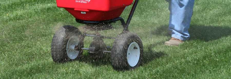 spreading organic lawn fertilizer
