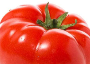 why grow grafted tomatoes