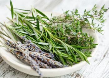 freshly harvested herbs