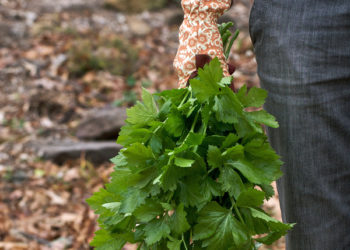 Herbs that have been harvested in the fall