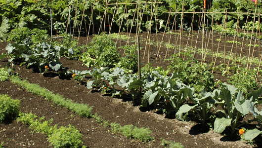 Learn how to grow a vegetable garden