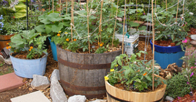 Vegetable plants growing in containers