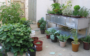 Growing_Veggies_In_Containers