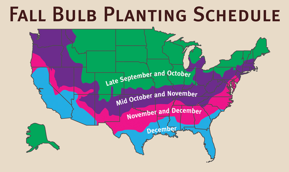 Planting schedule for fall planted flowering bulbs