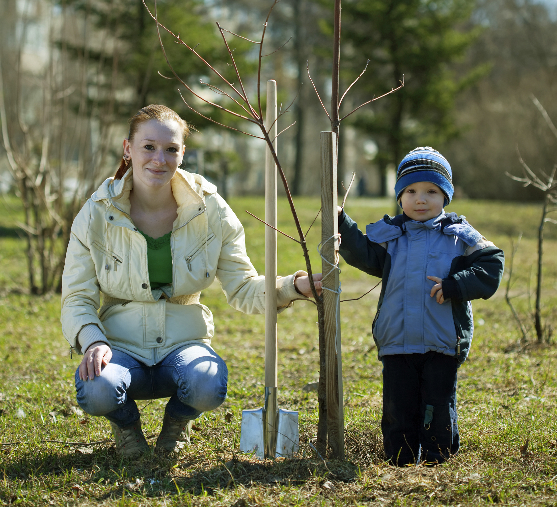 Mom son planting new trees winter