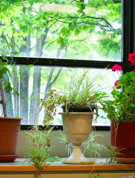 bringing plants indoors to grow during the winter