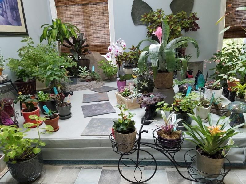 overwintering plants indoors