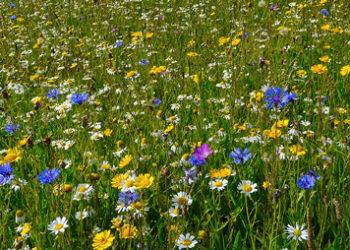 Growing Wildflowers In A Meadow