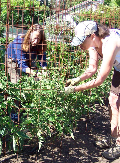 Feeding the hungry through community gardening