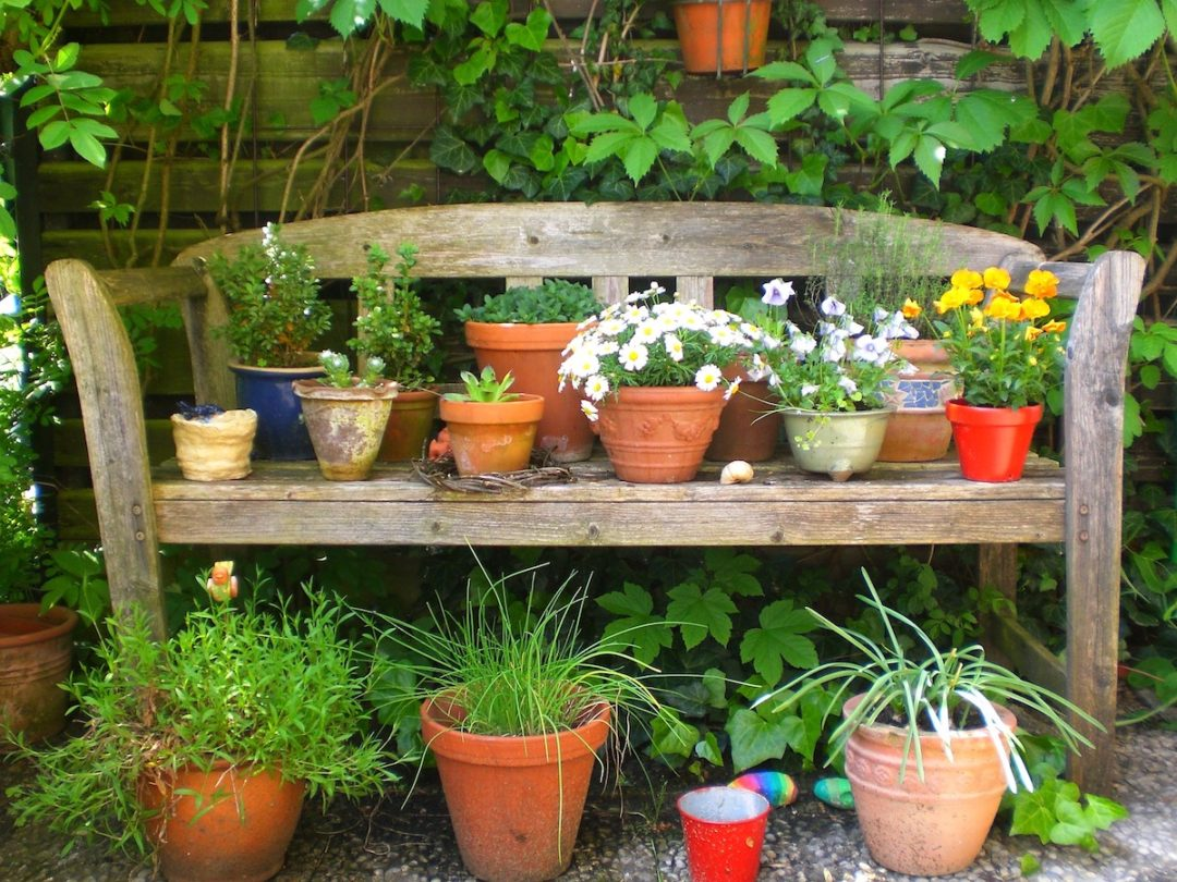 plants for small containers