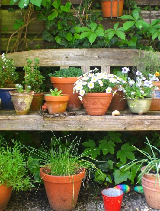 plants and flowers in containers