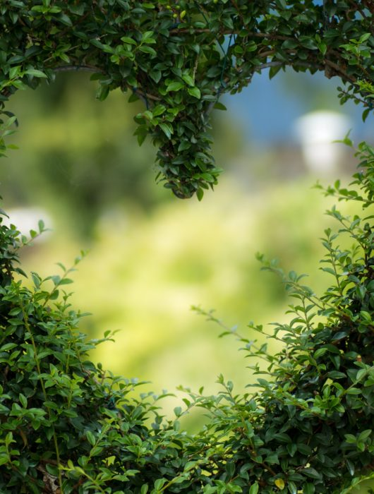 love natural pest control