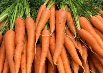 How to care for fall harvested carrots