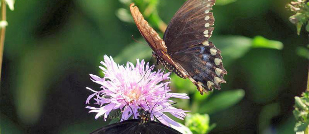 10 plants that will attract butterflies