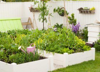 growing vegetables in raised beds