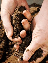 test your soil before planting asparagus