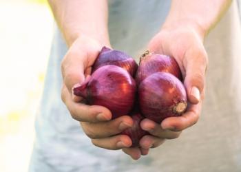 harvesting_onions